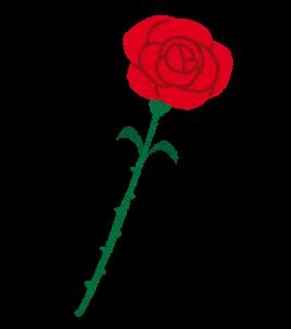 chichinohi_rose_red