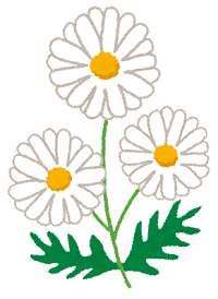 flower_marguerite